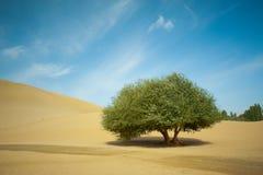 Deserto com uma árvore Imagens de Stock