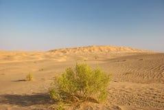 Deserto com verde Imagem de Stock Royalty Free