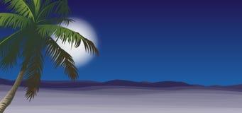 Deserto con la notte della palma Immagini Stock Libere da Diritti