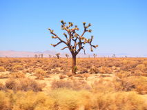 Deserto da estrada 101 Foto de Stock
