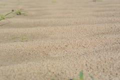 Deserto da mola Imagem de Stock