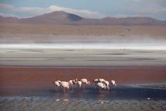 Deserto de Atacama fotografia de stock
