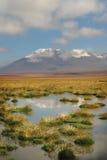 Deserto de Atacama chileno fotografia de stock royalty free