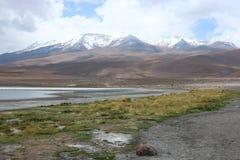 Deserto de Atacama Laguna Capina Imagens de Stock Royalty Free