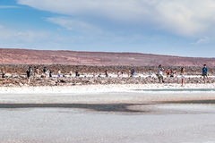 Deserto de Atacama, o Chile Foto de Stock