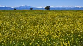 15-08-2017 deserto de Atacama, o Chile Deserto de florescência 2017 Imagens de Stock Royalty Free