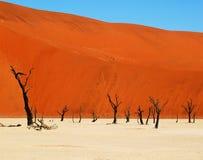 Deserto de Deadvlei - de Namib Imagens de Stock