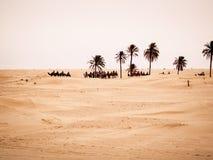 Deserto de Douz, Tunísia Fotos de Stock Royalty Free