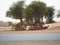 Deserto de Dubai Fotografia de Stock Royalty Free