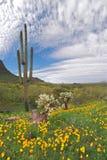 Deserto de florescência Imagens de Stock Royalty Free