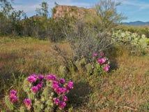 Deserto de florescência Fotografia de Stock Royalty Free