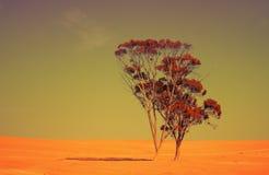 Deserto de Judean Fotografia de Stock Royalty Free