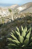 Deserto de Judean Céu bonito do dia do whit das montanhas maguey do whit da vegetação do deserto fotos de stock