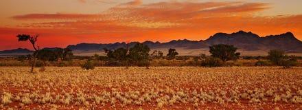 Deserto de Kalahari Foto de Stock