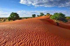 Deserto de Kalahari, Namíbia foto de stock royalty free