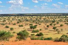 Deserto de Kalahari, Namíbia Fotos de Stock Royalty Free