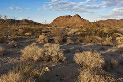 Deserto de Mojave Imagens de Stock