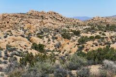 Deserto de Mojave Imagem de Stock