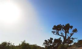 Deserto de Mojavi Foto de Stock Royalty Free