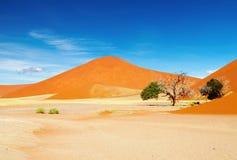 Deserto de Namib Fotografia de Stock