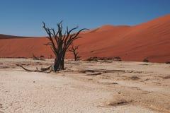 Deserto de Namib Imagem de Stock