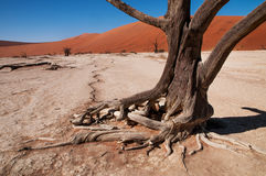 Deserto de Namib Fotos de Stock Royalty Free