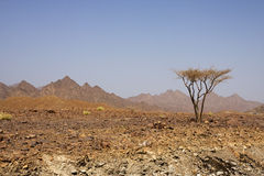Deserto de Oman Imagens de Stock Royalty Free