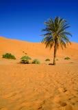 Deserto de Sahara Fotografia de Stock