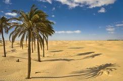Deserto de Sahara Imagem de Stock Royalty Free