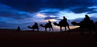 Deserto de Sahara colorido mostrado em silhueta trem do céu do camelo Foto de Stock Royalty Free