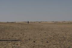 Deserto de Sahara em Tunísia Fotos de Stock Royalty Free
