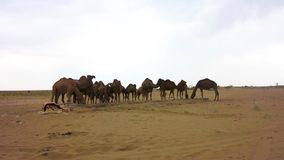 Deserto de sal de Kashan Maranjab video estoque