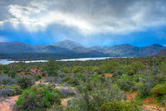 Deserto de Sonoran foto de stock