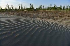 Deserto de Taklimakan fotografia de stock