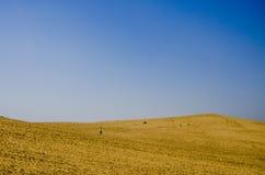 Deserto de Taklimakan, Xinjiang de China Fotos de Stock