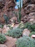 Deserto del cactus Immagine Stock Libera da Diritti
