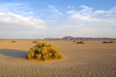 Deserto del Mojave sterile Fotografia Stock Libera da Diritti