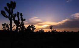 Deserto del Mojave U.S.A. Fotografia Stock