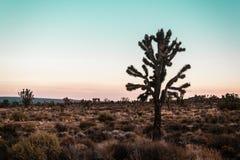 Deserto del Mojave vicino a Route 66 in California fotografie stock libere da diritti