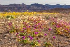Deserto del Mojave Wildflowrs Fotografie Stock