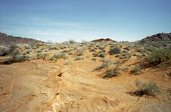 Deserto del Nevada Fotografie Stock