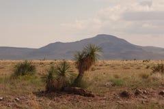 Deserto del New Mexico Fotografie Stock Libere da Diritti