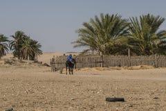 Deserto del Sahara in Tunisia Immagini Stock
