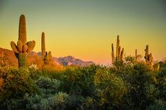 Deserto dell'Arizona Fotografia Stock Libera da Diritti