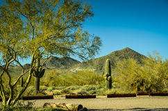 Deserto dell'Arizona Sonoran Fotografie Stock Libere da Diritti