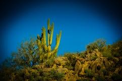 Deserto dell'Arizona Sonoran Fotografia Stock Libera da Diritti