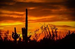 Deserto dell'Arizona Sonoran Immagini Stock Libere da Diritti
