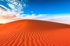 Piste animali in duna di sabbia rossa Immagine Stock Libera da Diritti