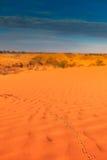 Piste animali in duna di sabbia rossa Fotografia Stock