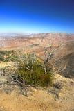 Deserto della montagna Immagine Stock